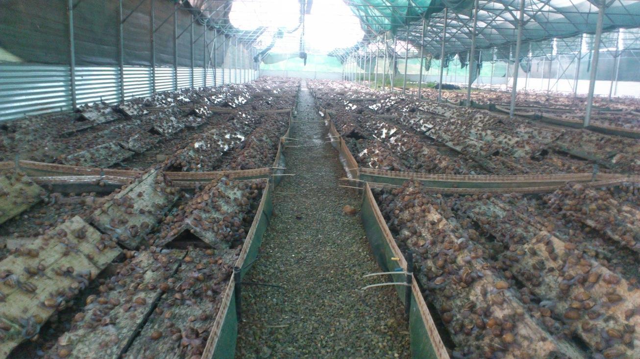 Εκτροφή σαλιγκαριών – Οδηγίες ΥΠΑΑΤ