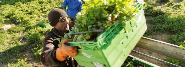 Έρχονται 28,8 εκατομμύρια ευρώ για τους Νέους Αγρότες της Κρήτης!