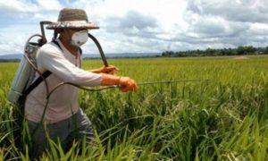 Στο 10% ο τζίρος παράνομων φυτοφαρμάκων. Χωρίς συνταγή θα χάνονται οι επιδοτήσεις των αγροτών
