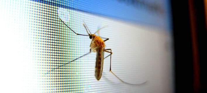 Ελληνας ερευνητής δημιούργησε κουνούπια ανθεκτικά στον ιό του δάγκειου πυρετού