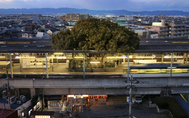 Δέντρο αναπτύσσεται σε σιδηροδρομικό σταθμό εδώ και 700 χρόνια!