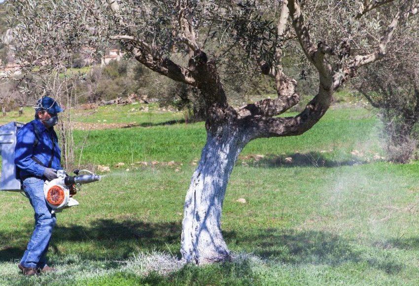 Προκηρύχτηκε ο διαγωνισμός για τη δακοκτονία στην Κρήτη
