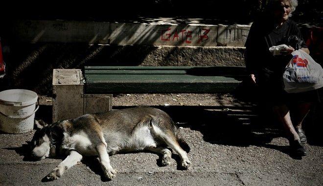 Άρειος Πάγος: Αυτόφωρο σε όσους βασανίζουν ζώα