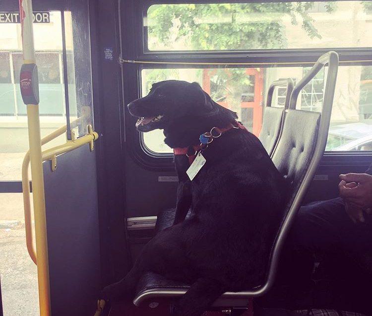 Σκύλος παίρνει μόνος το λεωφορείο και πηγαίνει στο πάρκο