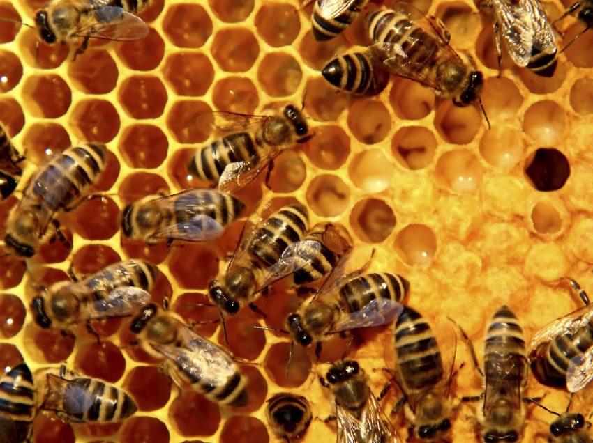 Οι μέλισσες… τρελάθηκαν